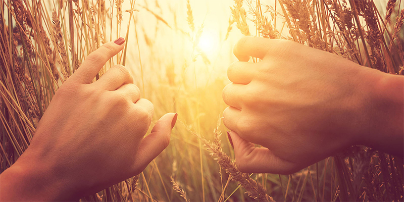 female hands letting sunlight in through wheat field